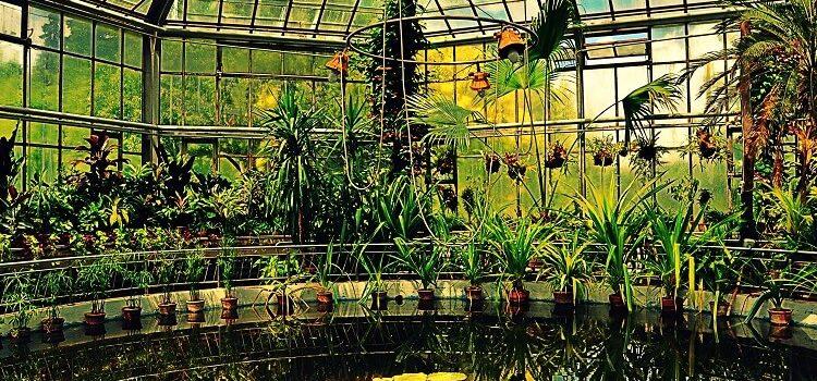 USR propune pentru bugetul din 2018: Seră educațională cu plante exotice în Parcul Botanic din Timișoara