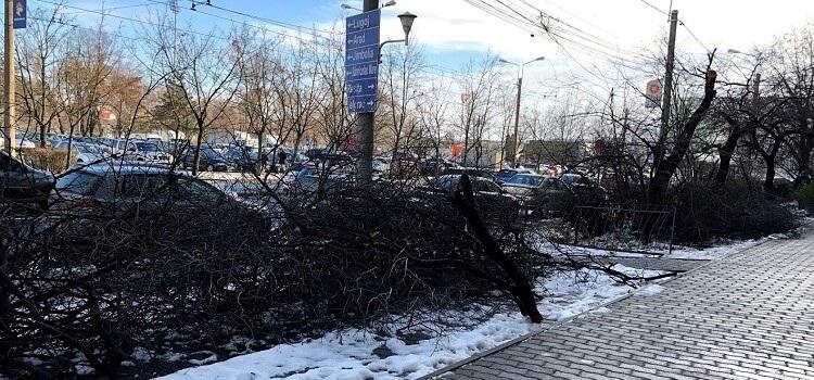USR propune pentru bugetul din 2019: Tomograf pentru arbori