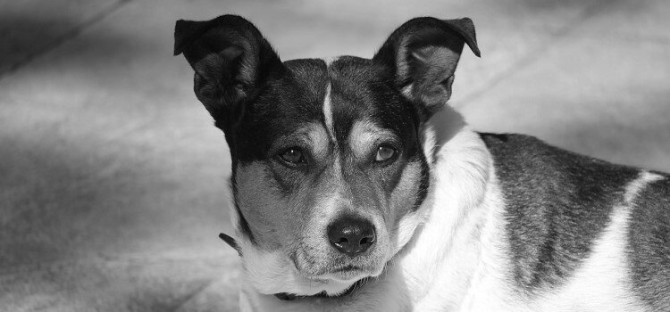USR propune pentru bugetul din 2019: Clinică veterinară mobilă pentru sterilizarea animalelor